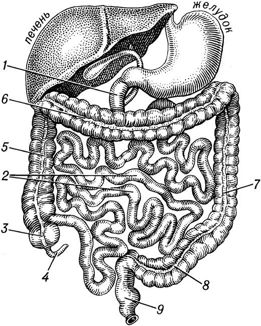 клизмы для очищения кишечника от паразитов